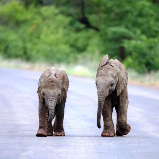 sri lanka elephants 5