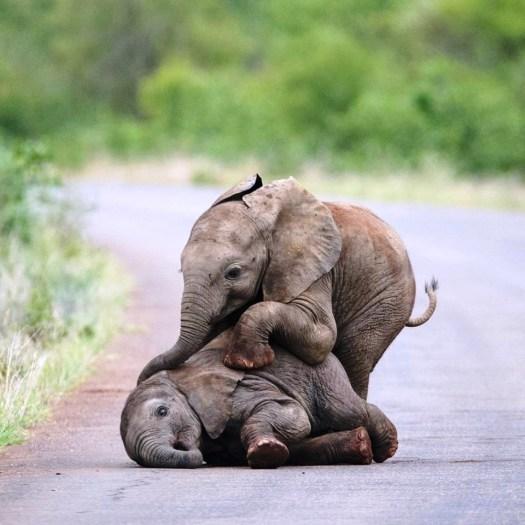 sri lanka elephants 6