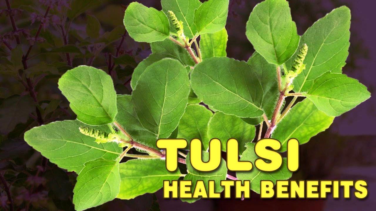 sri lanka island tours tulsi health ayuvedic (1)