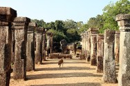 Sacred Quadrangle Vatadage Polonnaruwa Sri Lanka 23