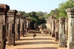 Sacred Quadrangle Vatadage Polonnaruwa Sri Lanka 23