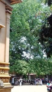 Kelaniya Temple Sri Lanka 14