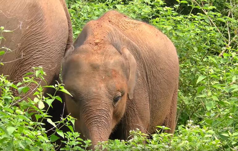 UdaWalawe Safari Park Elephant