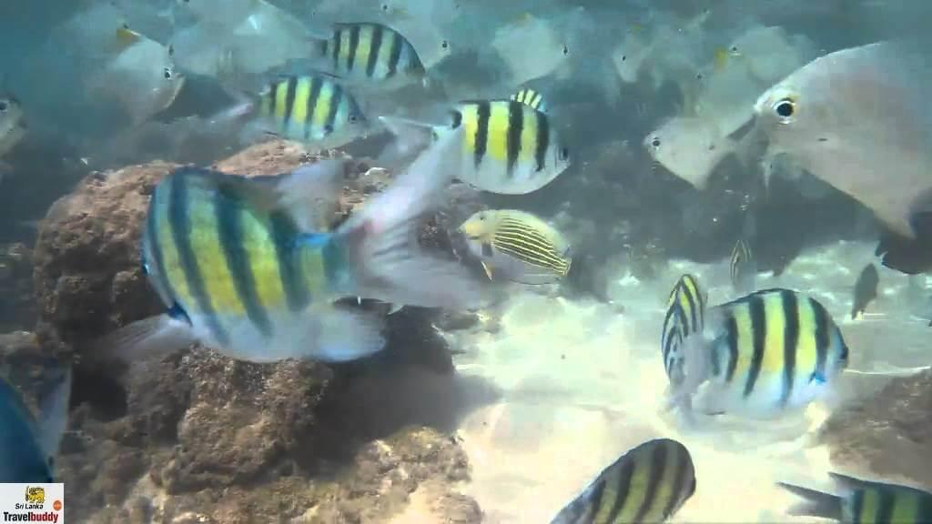 hikkaduwa snorkeling