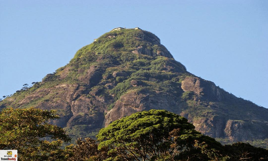 adam peak