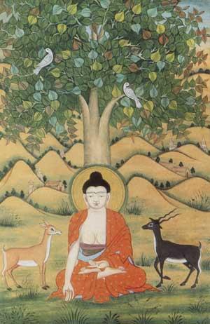 Image result for buddha peepal tree