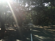 sunlight-09