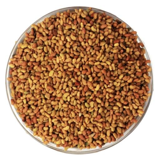 SriSatymev Alfalfa Seeds | Rajko
