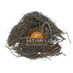 SriSatymev Bargad Root | Banyan