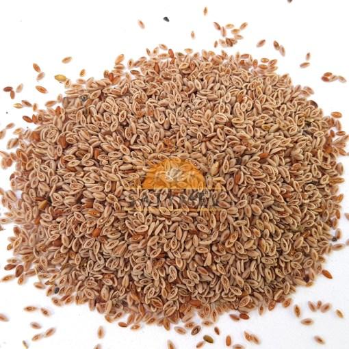SriSatymev Isabgol Seeds