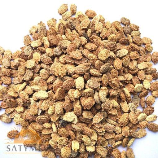 SriSatymev Karela Beej | Bittergourd Seeds