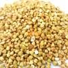 SriSatymev Kuttu Giri | Titaphapur | Buckwheat