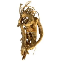 SriSatymev Indrayan Roots