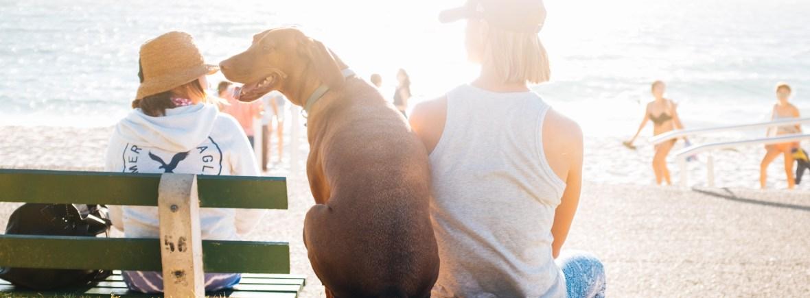 meet-team-pet-care-dog-women-sunny-walk