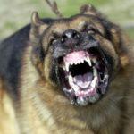 Схватка с <b>собакой</b> (Денис Мезулов)
