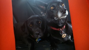 Daisy and Rubes - ready for a drive in the car
