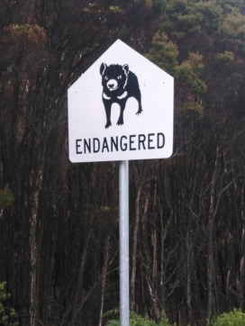 Diable de Tasmanie Australie