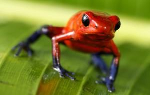 tpierson-redfrog