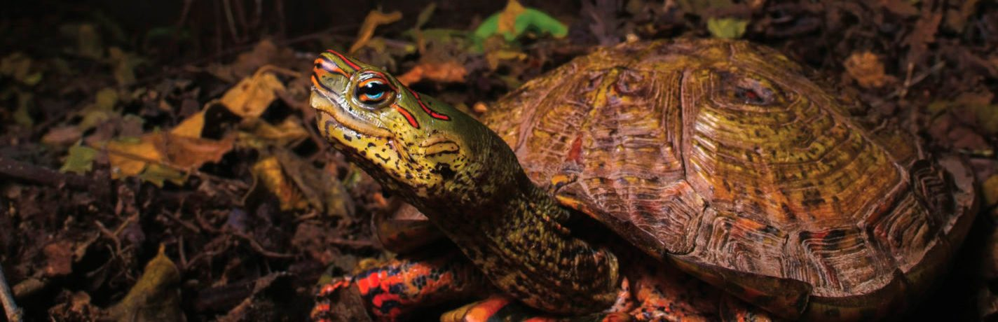 Herpetological Review 51(1) available online!