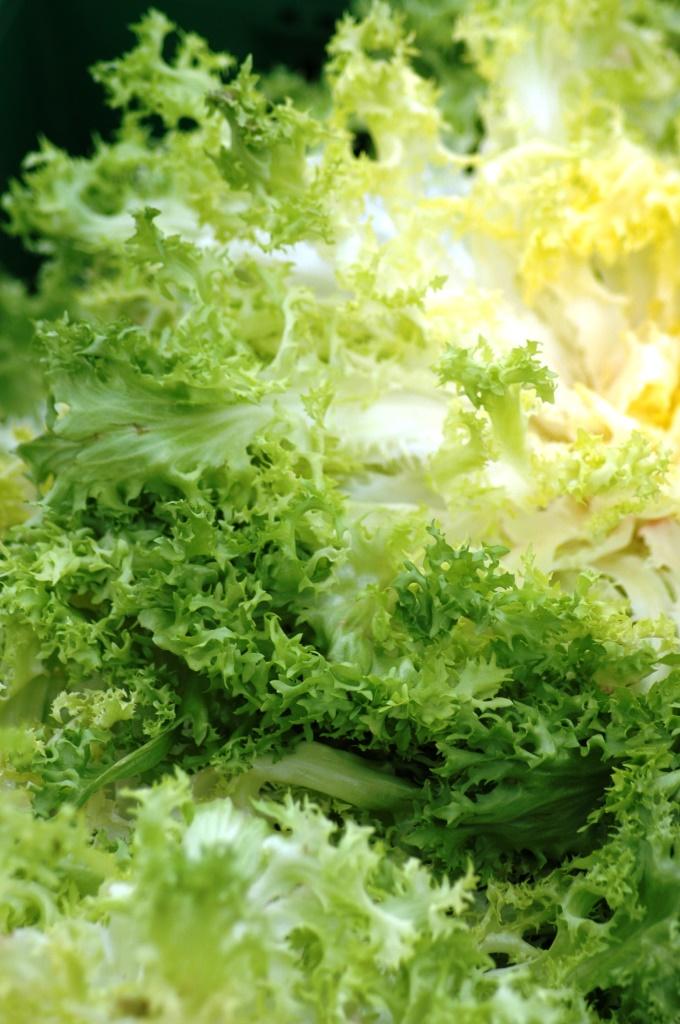 Insalata di Zucchine e Salsa alla Menta