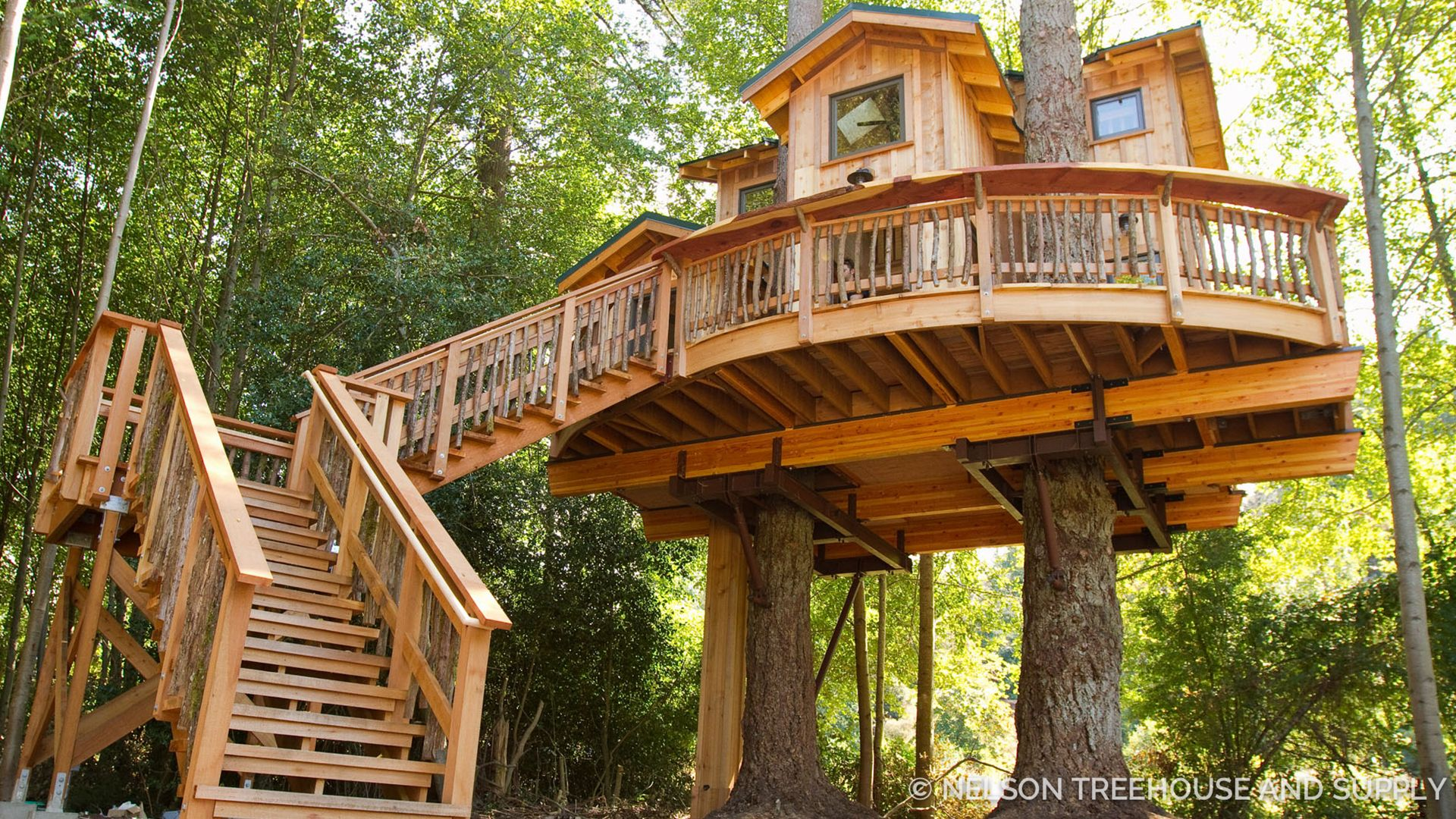 Fall Moving Wallpaper Treehouses Swenson Say Fag 233 T