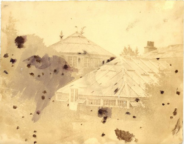 mage of the Octagonal Palm House taken in 1854. Note the Palm fronds breaking through the roof. Photographer: Dr. Duncan. Image: Archives of the Royal Botanic Garden Edinburgh