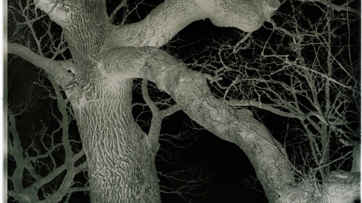 Negative of Tree Portrait by Magnus Jackson