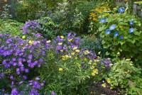 Fall autumn flower garden   Plant & Flower Stock ...