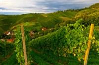 Vineyards, Offenburg, Baden-Wrttemberg, Germany | Blaine ...