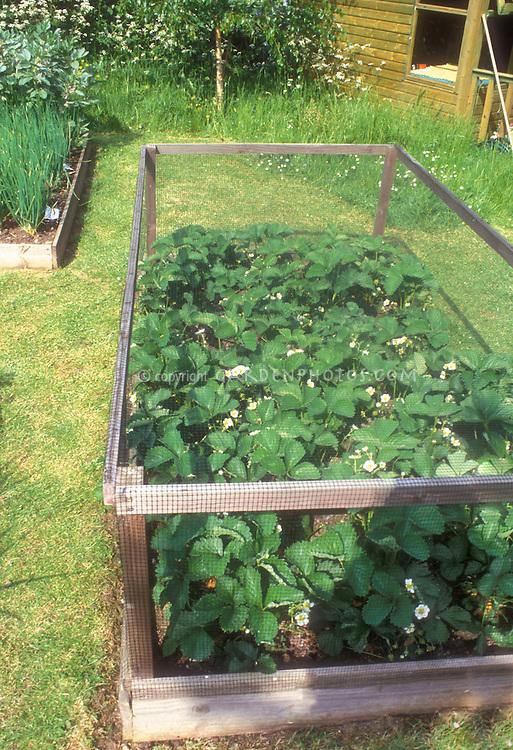 Vegetable Garden Wood Frame