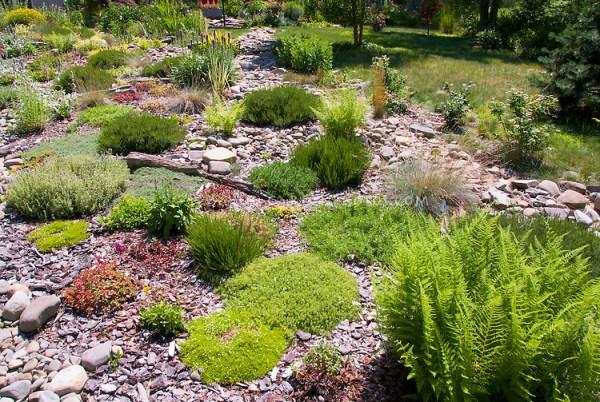 sloped garden in sun plant &