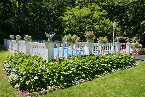 swimming pool landscaping plant