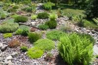Rock garden plants   Plant & Flower Stock Photography ...