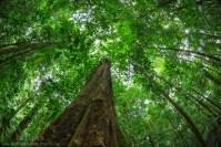 Rainforest Canopy - Osa Peninsula, Costa Rica   Alex Hyde