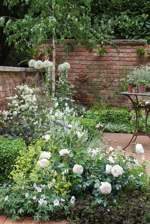 white flower garden plant &