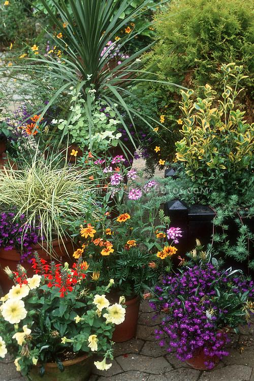 Best Low Growing Perennials