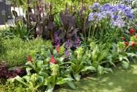 Eucomis, Agapanthus, Canna, tropical garden | Plant ...