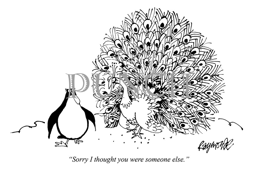 Animals, Pets, Penguins and Peacocks Cartoons by Raymonde