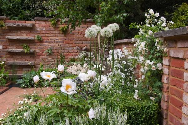 white flowers in garden roses