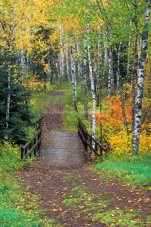Fall Woods Wallpaper Path In Woods Split Rock Lighthouse Sp Fall Color Rainy