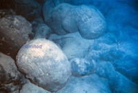 Underwater Pillow Lava rocks | Visuals Unlimited