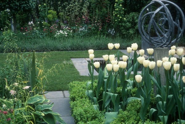 white tulips and sundial in spring