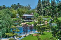 Japanese Friendship Garden, Koi ponds, Balboa Park