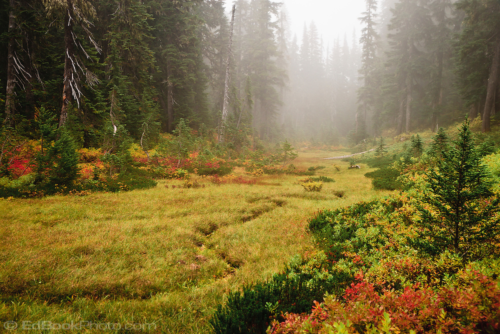Cloudy Weather Hd Wallpapers A Meandering Intermittent Stream Courses Through A Foggy