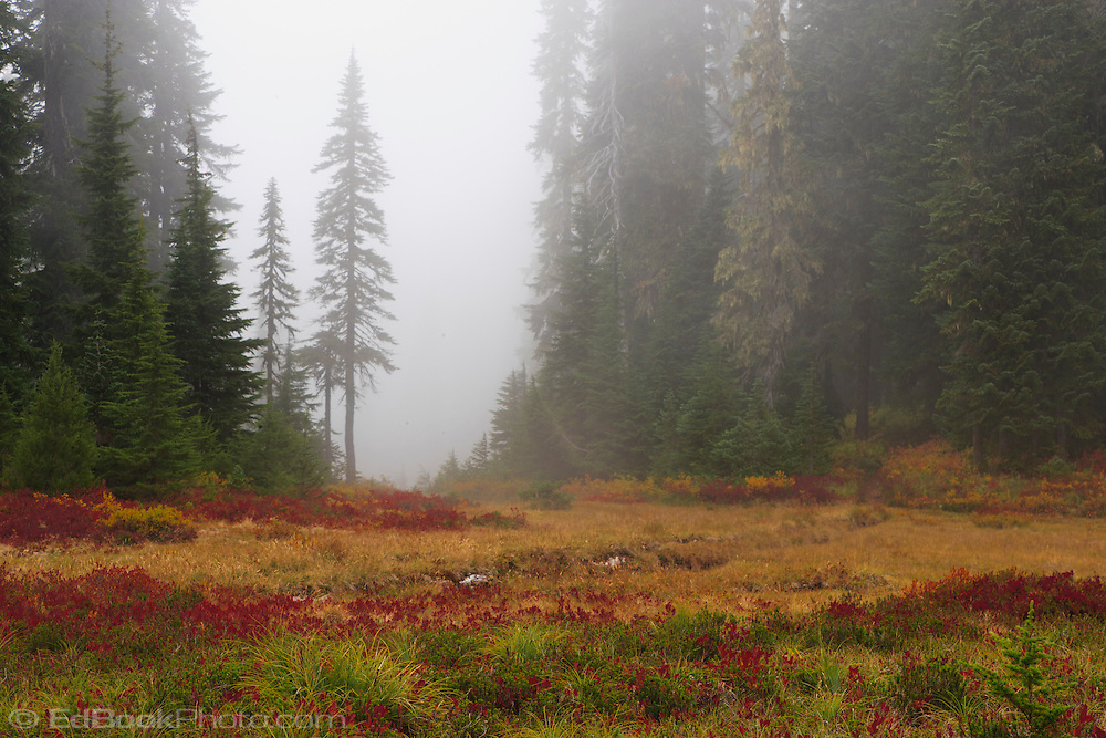 Hipster Fall Wallpaper An Autumn Meadow Brings Warm Color To A Cool Fog Shrouded