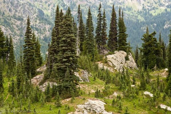 subalpine fir and mountain hemlock