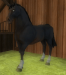 New Horse Guide | Star Stable Online Ride Through
