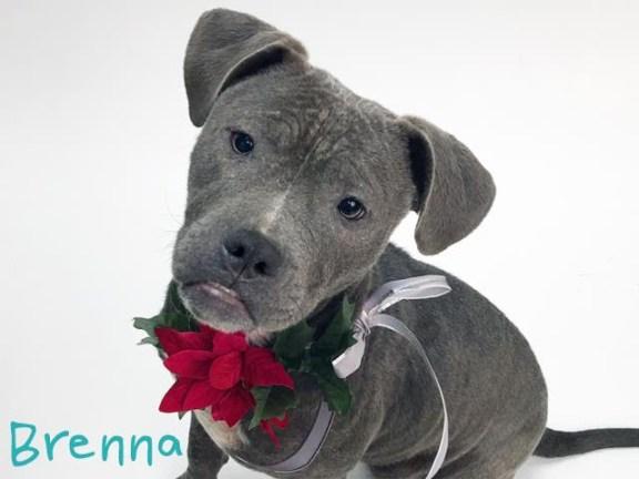 Brenna