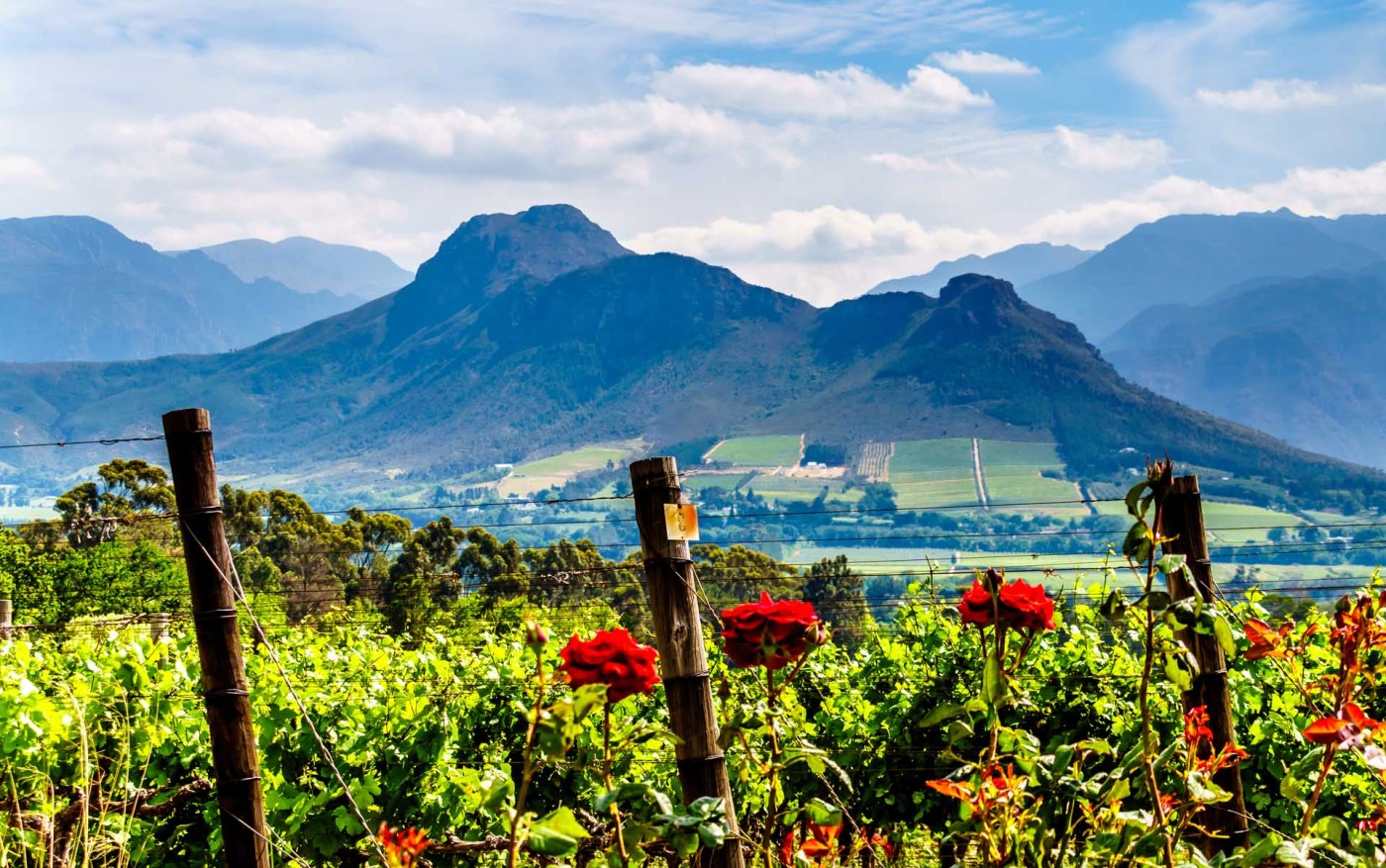 Green technologies to flourish at Western Cape SEZ - ssrdind