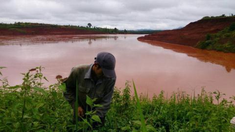 Một nông dân đang hái chè tận thu ngay phần trên của hồ thải quặng đuôi số 5. (Ảnh: TTO)